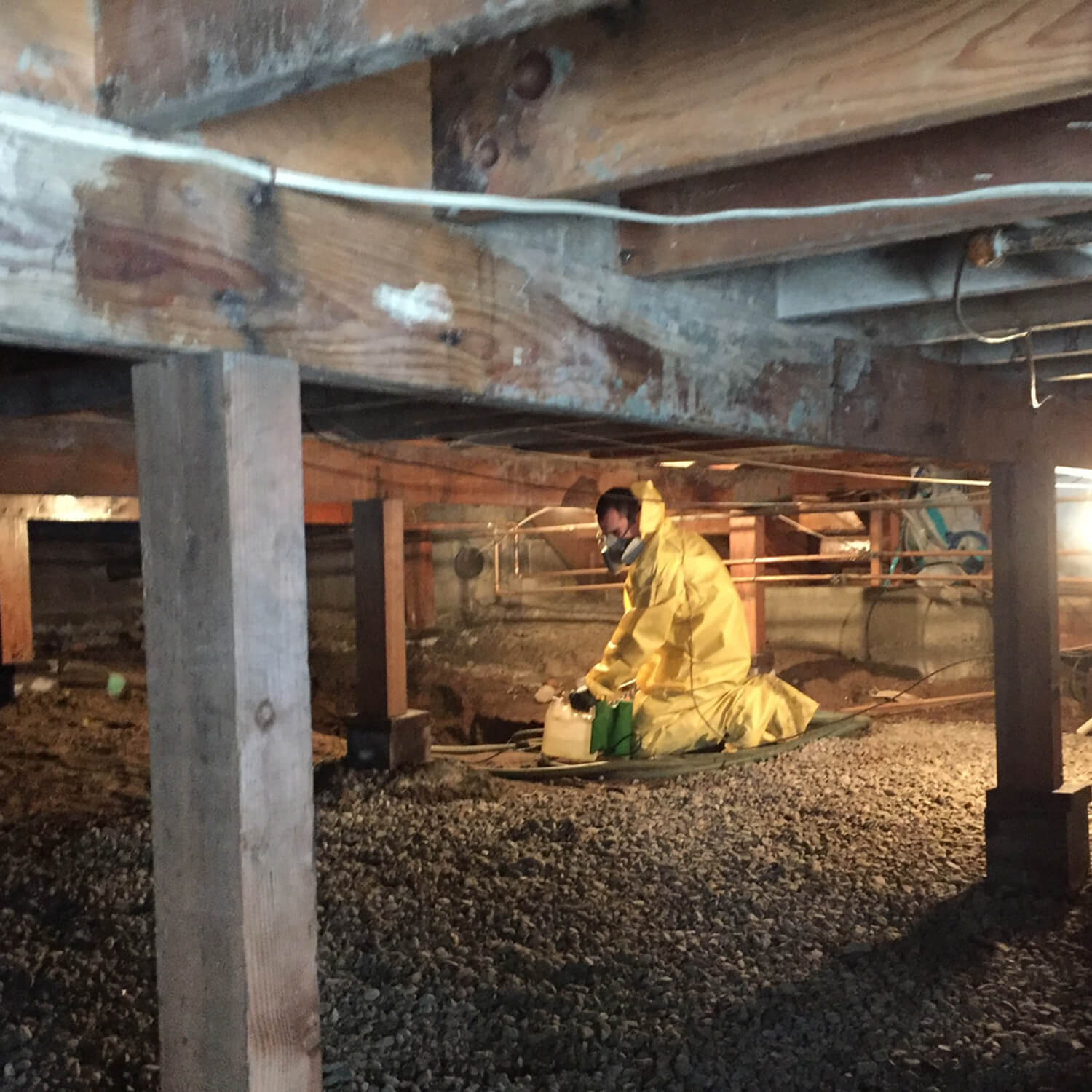 mold asbestos flooring remediation services