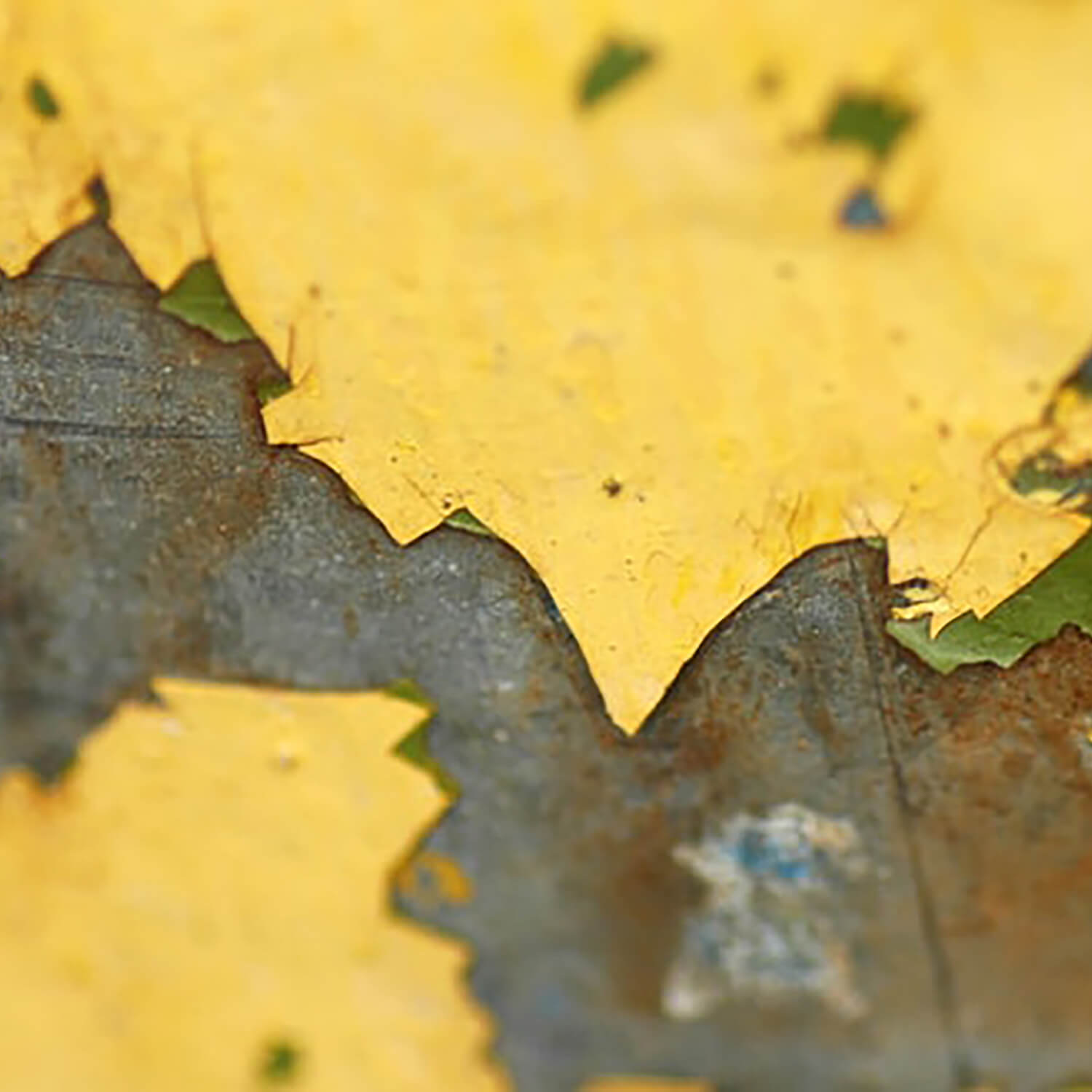 We offer lead paint remediation.
